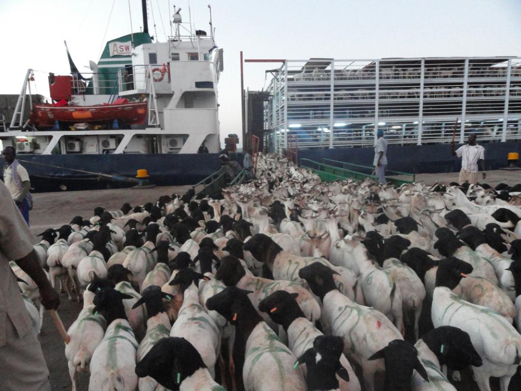 Somaliland-Economy-Livestock