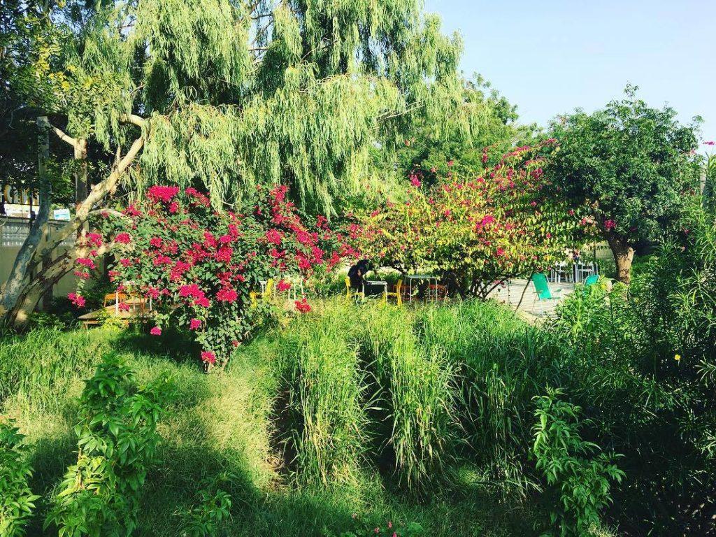 Indian Canteen Hargeisa - garden image
